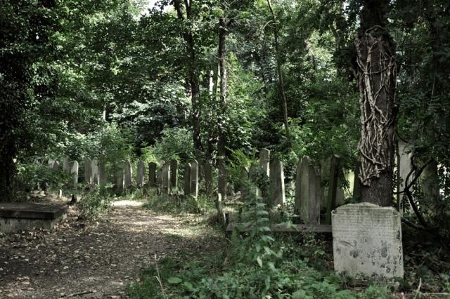 Tower Hamlets Cemetery Park August 2013