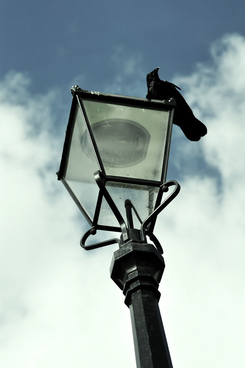 A great feature of Blackheath is the many 'ye olde lampostes' that stand across it. This one had a spooky crow on it.