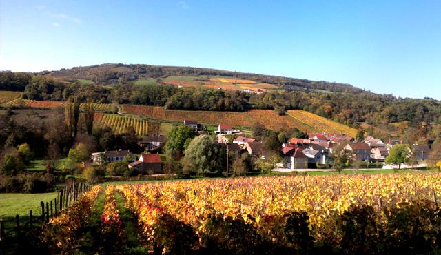 The golden vines of Burgundy