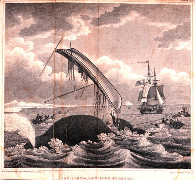 648px-Whaling-dangers_of_the_whale_fishery